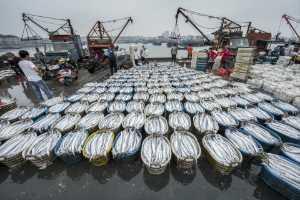 APAS Honor Mention - Xiaohui Qiu (China)  The Fishing Harbours