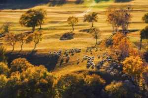 SIPC Gold Medal - Xianna Song (China)  Pasture