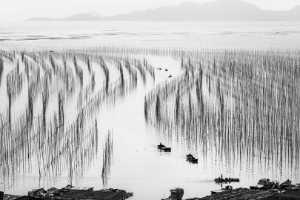 PhotoVivo Gold Medal - Huifen Wang (China)  Landscape Painting