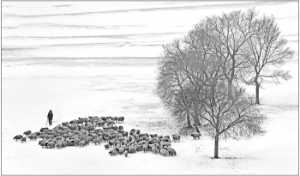 APU Gold Medal - Su Fu Sou (Macau)  Winter Herdsman