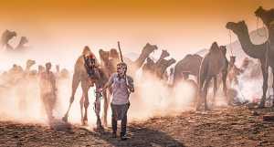 APAS Honor Mention e-certificate - Yan Zhang (China)  Camel Market