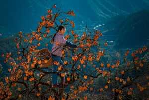 Circuit Merit Award e-certificate - Min Wang (China)  Joy Of Harvest