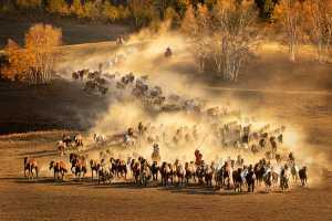 APU Winter Honor Mention E-Certificate - Yuk Fung Garius Hung (Hong Kong)  Running Horses 8