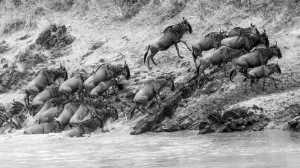 ICPE Gold Medal - Qun Gu (China)  Cross The River