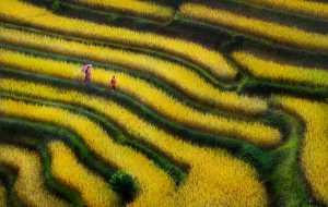 Circuit Merit Award e-certificate - Manh Cuong Vu (Vietnam)  Coming In The Yellow Season