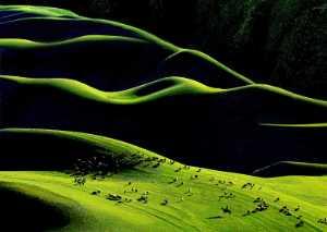 APAS Gold Medal - Yichi Wang (China)  Spring Herd