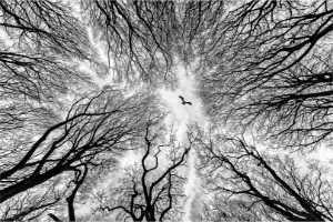 PhotoVivo Gold Medal - Michael Whelan (England)  Woodland Wandering
