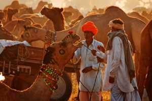 Best 100 Collection - Pui-Chung Steven Yee (Singapore)  Pushkar Camel Sale
