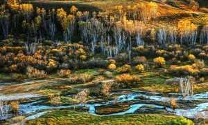 PhotoVivo Honor Mention e-certificate - Aimin Zhu (China)  Grassland Autumn 1
