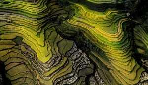 PhotoVivo Gold Medal - Manh Vu (Vietnam)  Color Patterns