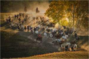 PhotoVivo Gold Medal - Lee Eng Tan (Singapore)  Horseherding 3