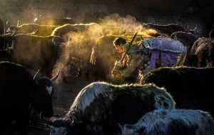 APU Winter Merit Award E-Certificate - Risheng Liu (China)  The Morning Of The Ranch