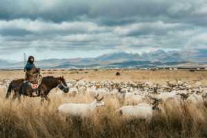 PhotoVivo Gold Medal - Renjie Luo (China)  Shepherd