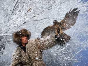 Circuit Merit Award e-certificate - Daming Liang (China)  Eagle Hunter