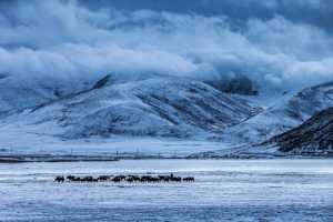 Circuit Merit Award e-certificate - Yu Lun (China)  Herd Back