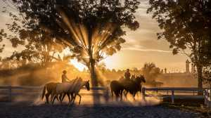 APU Honor Mention e-certificate - Wee Lai (Malaysia)  Sunset Horse Riding In Putrajaya