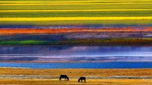 APU Merit Award E-Certificate - Kai Zheng (China)  Herd Horses
