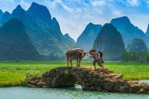 APU Honor Mention e-certificate - Ting Huang (China)  Herding
