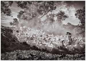 Circuit Merit Award e-certificate - Yan Wong (China)  Shepherd Raising Sheep