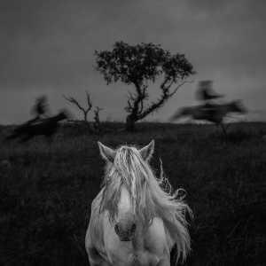 PhotoVivo Gold Medal - Kangmin Li (China)  White Horse