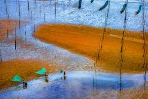 PhotoVivo Gold Medal - Zenghua Liu (China)  Fishing In The Mud 8