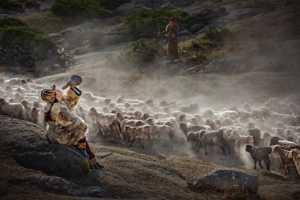 PhotoVivo Honor Mention e-certificate - Zhi Xu (China)  Song Of Shepherd