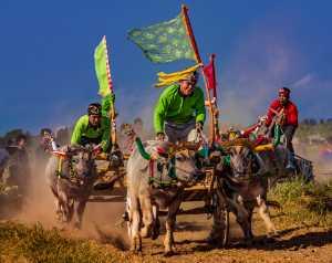 PhotoVivo Gold Medal - Tirta Widjaya (Indonesia)  Makepung Buffalo Races 003