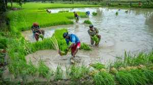 Circuit Merit Award e-certificate - Jin Huat Yeoh (Malaysia)  Rice Farmer Group