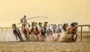 GTPC Merit e-certificate - Juanjuan Shen (China)  Horse Horse