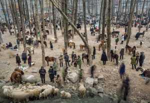 FIP Ribbon - Yong Zhang (China)  Liangshan Market