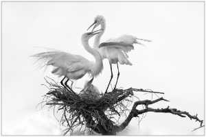 PhotoVivo Honor Mention e-certificate - Thomas Lang (USA)  The Love Nest