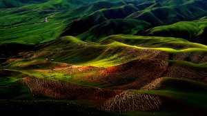 PSM Gold Medal - Kai Zheng (China)  Kalajun  Grassland