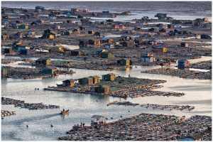 PSA Gold Medal - Thomas Lang (USA)  Homeland On The Sea