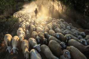 PhotoVivo Honor Mention e-certificate - Huu Hung Truong (Vietnam)  1-  Shepherd