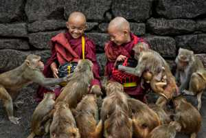 APU Gold Medal - Kwok Hoong Vincent Eu (Singapore)  Feeding the monkeys