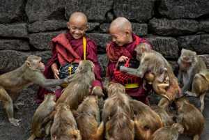 APU Gold Medal - Kwok Hoong Vincent Eu (Singapore)  Feeding the monkeys
