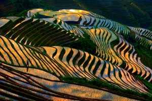 APU Gold Medal - Hartono Wijaya (Indonesia)  Colorful Rice Field