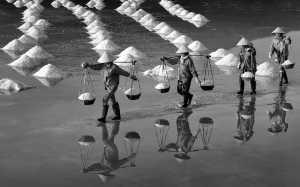 APAS Honor Mention e-certificate - Phong Tran (Vietnam)  Salt Harvesting
