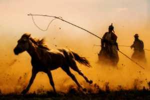 PhotoVivo Gold Medal - Jianguo Bai (China)  Life In Grassland 1