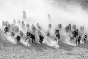 PhotoVivo Gold Medal - Zhesheng Zhuang (China)  Lasso Horses 4