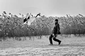 PhotoVivo Gold Medal - Chaivut Suthibutr (Thailand)  The Crane Whisperer
