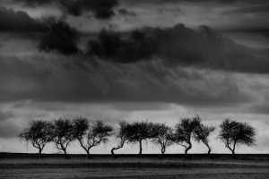 PhotoVivo Gold Medal - Krzysztof Muskalski (Poland)  Dancing Trees