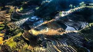 PhotoVivo Gold Medal - Manh Cuong Vu (Vietnam)  Sunlight On The Slopes