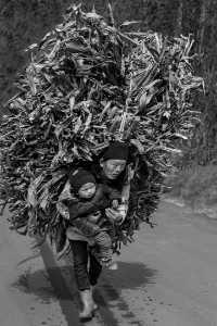 PhotoVivo Gold Medal - Xiyu Guo (China)  Tough Life