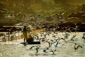 PhotoVivo Gold Medal - Rongmao Yang (China)  Fisherman 6