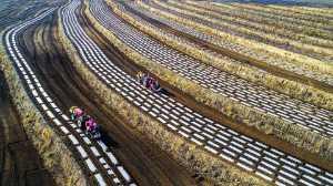 APU Honor Mention e-certificate - Minxian Zhang (China)  Farming By Technolgy