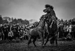 PhotoVivo Gold Medal - Aizhen Jiang (China)  Horse Fighting Of Dong