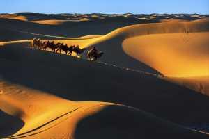 APU Honor Mention E-Certificate - Zhiyu Wu (China)  Camels 5