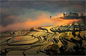 APU Spring Gold Medal - Yi Wan (China)  Terraced Field 18
