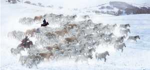 PSA Gold Medal - Jiashun Feng (China)  Herd Horse In Snowland 3